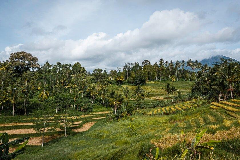 Munduk Rice Terraces.